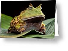 Pacman Frog  Greeting Card by Dirk Ercken