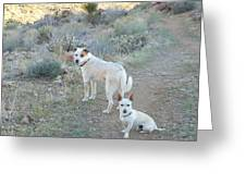 Paco And Mocha Greeting Card