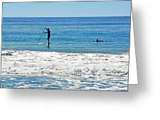 Paddle Boarder And Dolphin Greeting Card