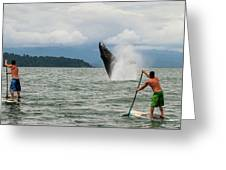 Paddle Boarders And Humpback Whale Greeting Card