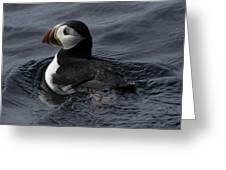 Paddling Puffin Greeting Card