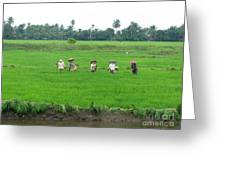 Paddy Field Workers Greeting Card