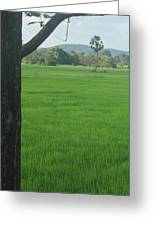 Paddy Fields 3 Greeting Card