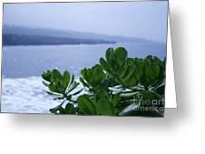 Pailoa Near Mokulehua At Hale 'o Pi'ilani Heiau Maui Hawaii Greeting Card