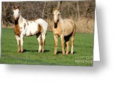 Paint And Palomino Mustang Greeting Card