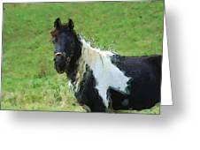 Paint Horse In Field Greeting Card
