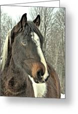 Paint Horse In Winter Greeting Card