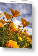Paint The Desert With Poppies  Greeting Card
