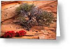 Paintbrush And Juniper Greeting Card by Inge Johnsson