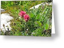 Paintbrush Spring Closeup Greeting Card