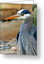 Painted Blue Heron Greeting Card