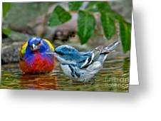 Painted Bunting & Cerulean Warbler Greeting Card