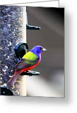 Painted Bunting - Img 9757-002 Greeting Card