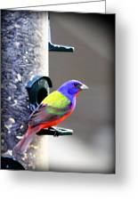 Painted Bunting - Img_9756-004 Greeting Card