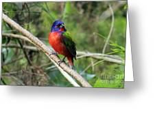 Painted Bunting Photo Greeting Card