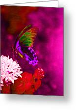 Painted Buterfly Greeting Card