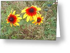 Painted Daisies Greeting Card