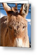 Painted Donkey 1 Greeting Card