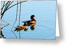 Painted Ducks Greeting Card