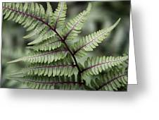 Painted Fern Greeting Card