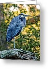 Painted Great Blue Heron Greeting Card