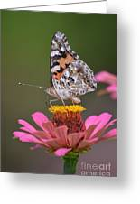 Painted Ladies Left Profile Greeting Card