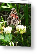 Painted Lady Butterfly  Greeting Card by Ella Char