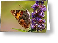 Painted Lady Greeting Card