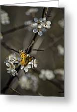 Painted Lady On Wild Plum Greeting Card