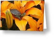 Painted Lilly Greeting Card