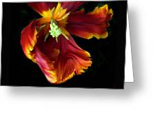 Painted Parrot Petals Greeting Card