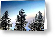 Painted Pine Tree Trio Greeting Card