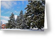 Painted Pines Greeting Card
