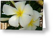 Painted Plumeria Greeting Card
