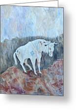 Painted Pony Greeting Card