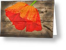 Painted Poppy On Wood Greeting Card