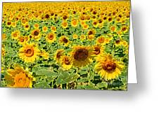 Painted Sunflower Field Greeting Card