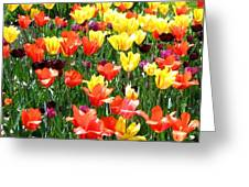 Painted Sunlit Tulips Greeting Card