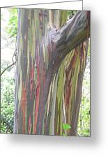 Painted Tree Greeting Card