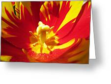Painted Tulip Greeting Card