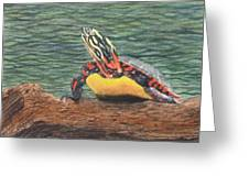 Painted Turtle Baby Greeting Card