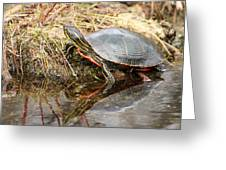 Painted Turtle Climbing Onto Shore Greeting Card
