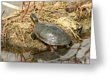 Painted Turtle Reflected In Water Greeting Card