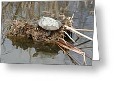 Painted Turtle Sunning On A Mud Flat Greeting Card