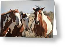Painted Wild Horses Greeting Card