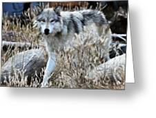 Painted Wolf Greeting Card