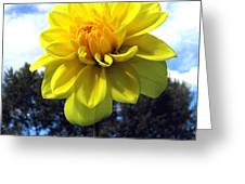 Painted Yellow Dahlia Greeting Card