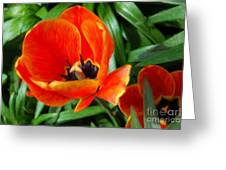 Painterly Red Tulips Greeting Card