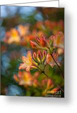Painterly Rhodies Greeting Card