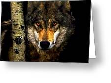 Painting ... Wolf In Aspen Grove Greeting Card
